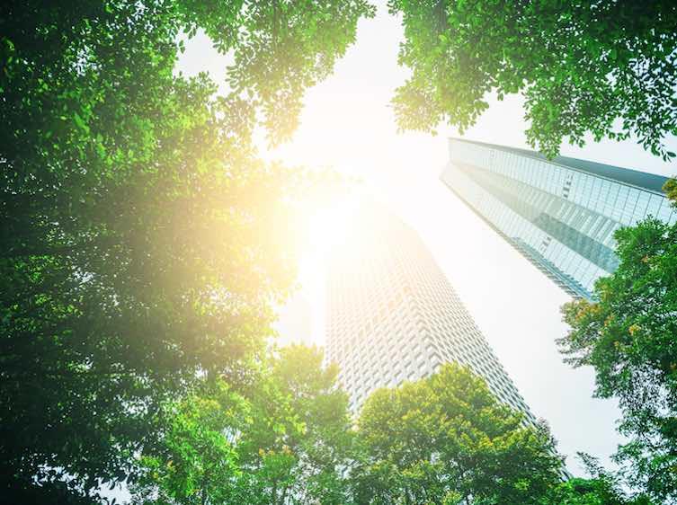 Environmental Career Options For Green Jobs Monster Com