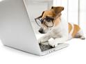 hund, bürohund, hund im büro, stress, gesundheit
